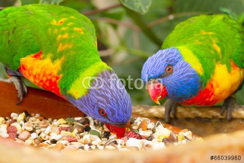 Papageien & Rassegeflügel