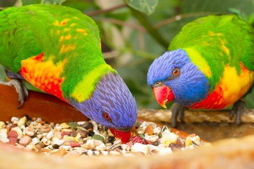 Papageien & Ziervögel<br>
